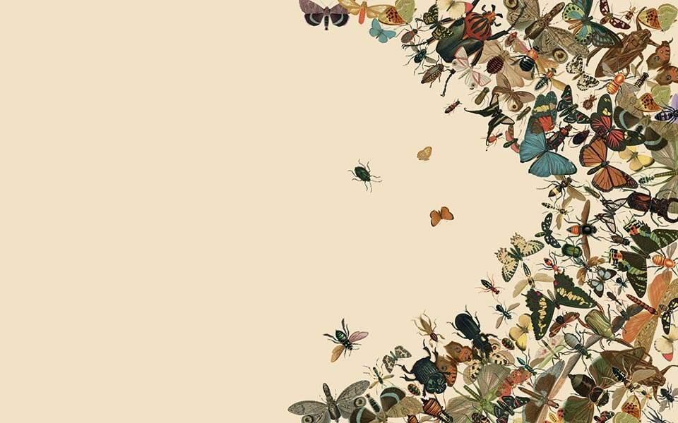 Πού πήγαν όλα τα έντομα;