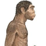 Ο Homo erectus δημιούργησε τον λόγο