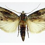 Ανακαλύφθηκε έντομο που τρώει πλαστικό