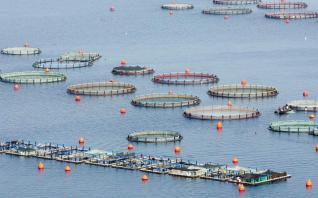 Αυξήθηκε η παραγωγή, έπεσαν οι τιμές στα ελληνικά ψάρια το 2017