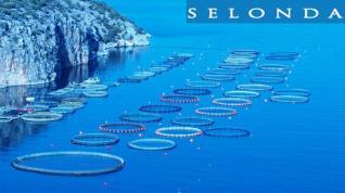Lidl: Στρατηγική συνεργασία με προϊόντα υψηλής προστιθέμενης αξίας με τη Σελόντα